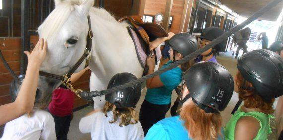Horsemanship Parties